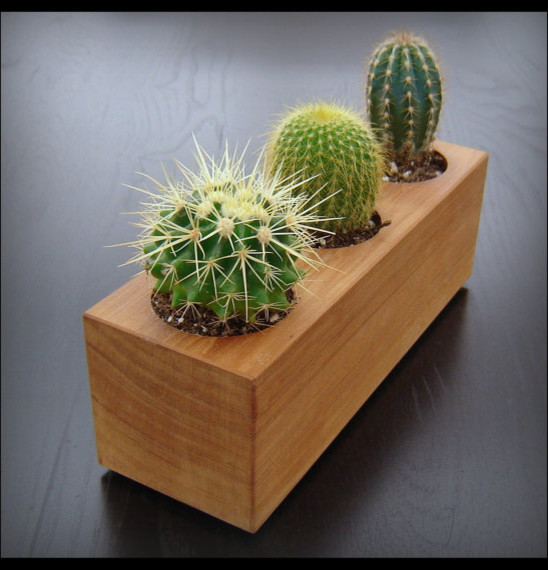 Modern Cactus Planter in Reclaimed Cedar by Andrews Reclaimed contemporary indoor pots and planters