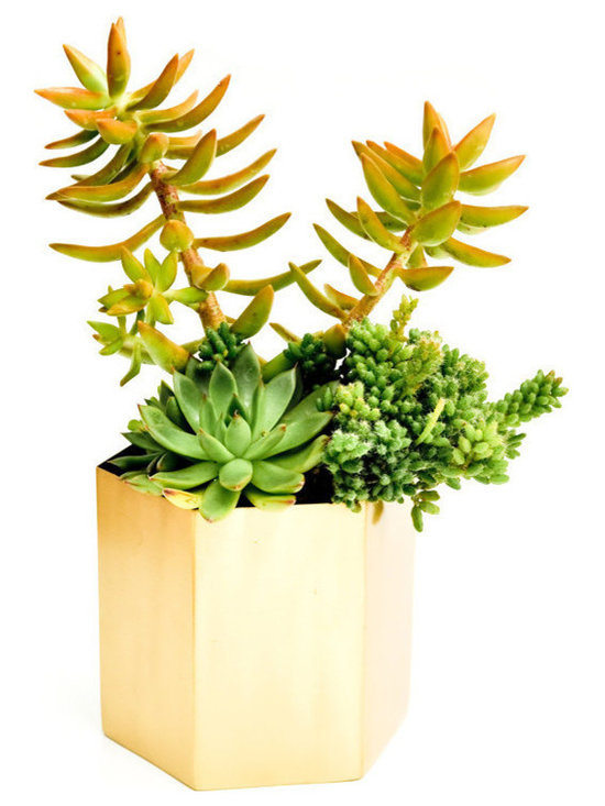 Brass Hexagon Planter -
