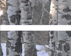 Triptych Aspens 2 contemporary-prints-and-posters