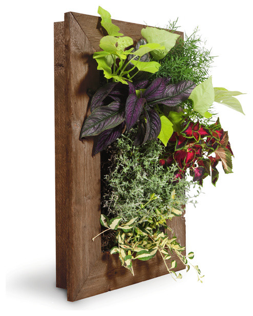 Grovert Wall Planter- Ghostwood - Rustic - Indoor Pots And Planters ...
