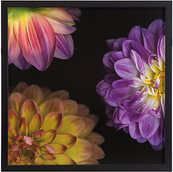 Purple Dahlia 1 contemporary-prints-and-posters
