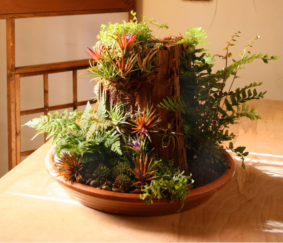 Mountain Dish Garden by Blue Journey contemporary plants