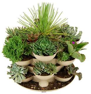 Planter basilic en pot