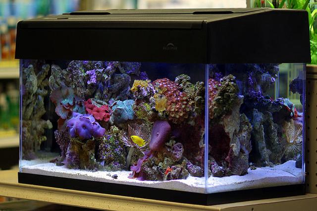 Reef-Live
