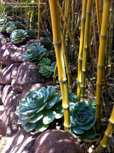 Succulents and Companion Plants contemporary-landscape