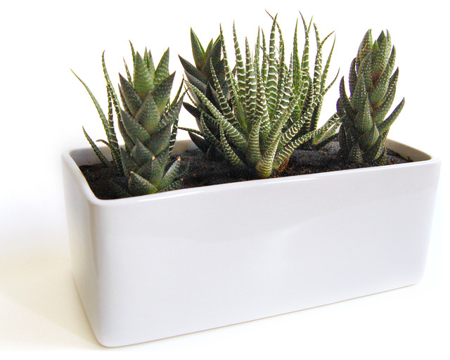 cactus garden in gloss planter modern plants by