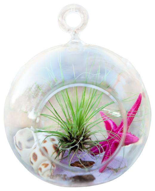 Pink Star Circle Terrarium eclectic-terrariums