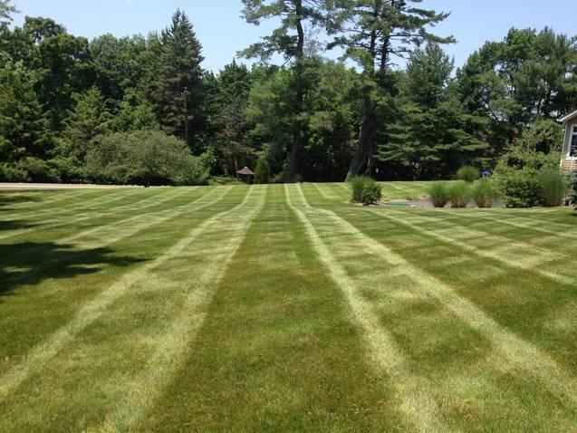 Lawn Maintenance traditional-landscape