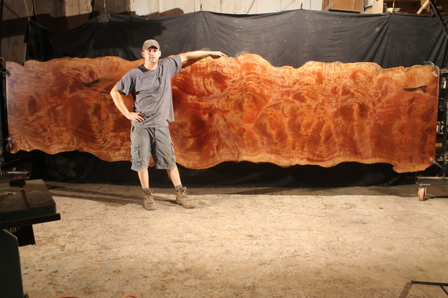 Rare 16' African Sapele Single Slab - Contemporary - Tabletop ...