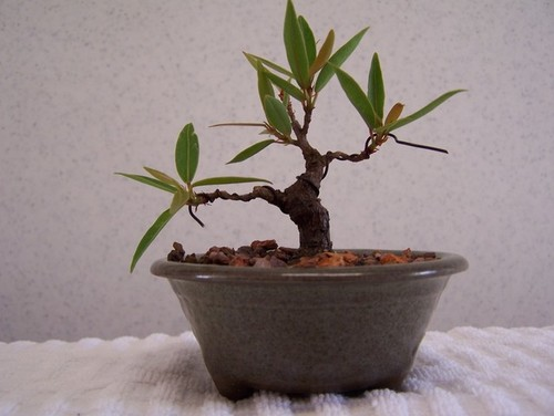how to make a plant from a cutting