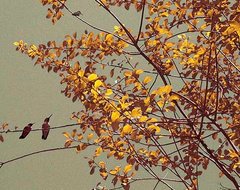 Hummingbirds On Yellow Tree - contemporary art, canvas art, art print, wall art contemporary-artwork