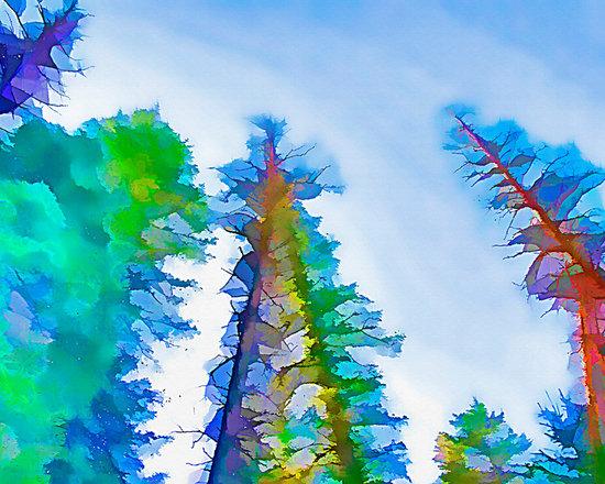 Forest Splash -