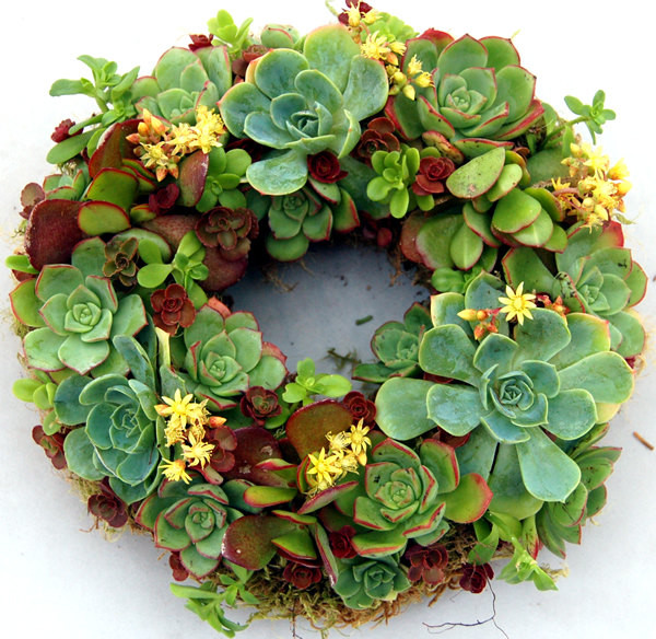Succulent Wreath Happiness 9 by Fairyscape modern-home-decor