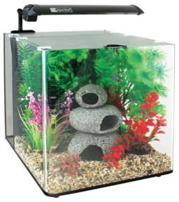 Aqua nano 22 litre tank contemporary aquariums fish for Fish tank riddle