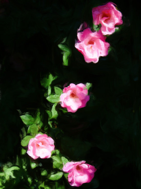 Five Pink Roses, enhanced - Five Pink Roses photograph by Ed Swonger