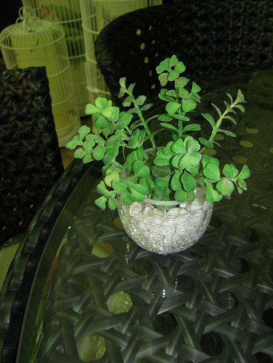 Flower Arrangement -