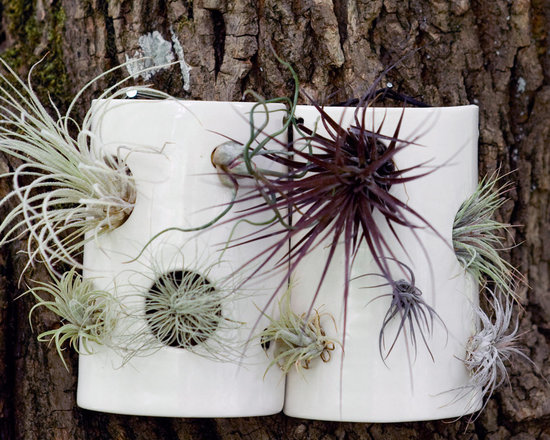 Airplant Wall Tile -