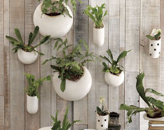 Shane Powers Ceramic Wall Planters contemporary-indoor-pots-and-planters