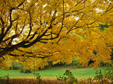 home design Brilliant Scenes of Fall Color Indoors and Out (84 photos)