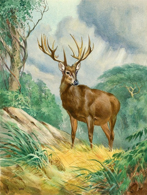 Schomburgk deer wallpaper wall mural self adhesive for Deer mural wallpaper