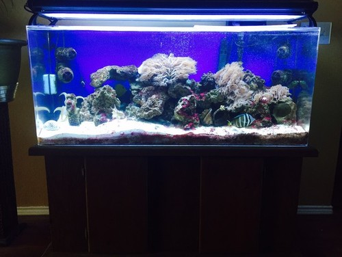 55 gal salt water aquarium for sale for Aquariums for sale near me