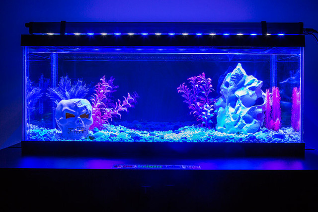 Led aquarium and fish tank lighting family room st for Black light for fish tank