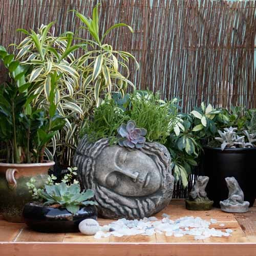 Sleeping Beauty in Cast Stone Pots eclectic-outdoor-pots-and-planters