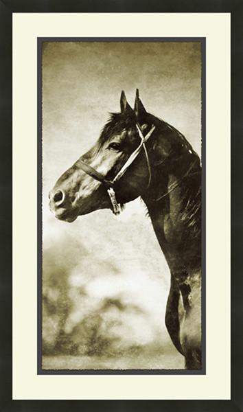"Soicher-Marin ""Horse"" Fine Art Photography contemporary-home-decor"