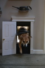 The Neilson Home / Sweet doggie door, you could actually put a lock on it for wh