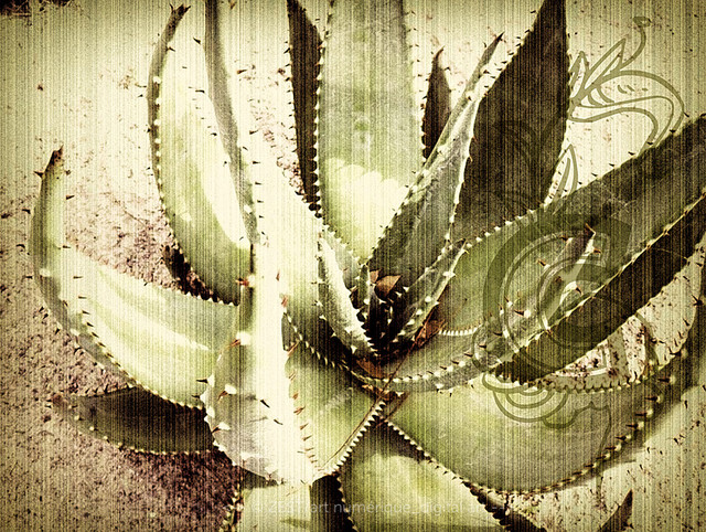 12-002 cactus tropical-artwork