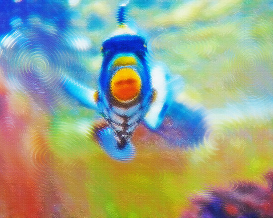 Aquarium Art 18 - Original photograph, taken in the fish aquarium section of a local pet store, has been digitally manipulated, via Photoshop, giving it a textured, painterly and surreal effect and feeling. The ripplling effect contributes to the sense of water, yet in a way that is out of the ordinary, almost abstract.  ARTWORK by STEVE OHLSEN