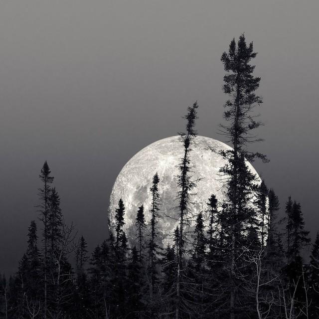 """Boreal Moon"" Artwork contemporary-originals-and-limited-editions"