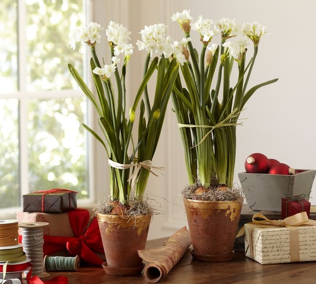 traditional plants by Pottery Barn