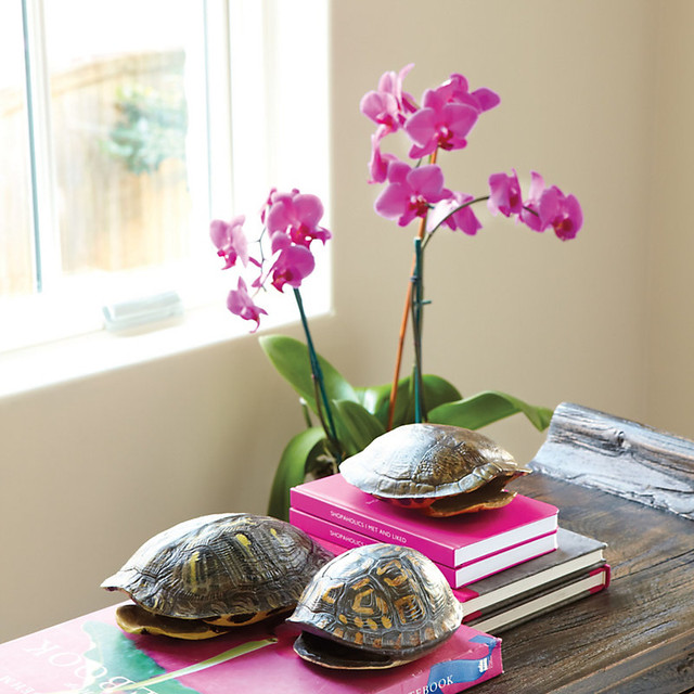 Set of 3 Handpainted Turtle Shell Studies traditional-home-decor