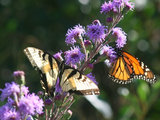 home design What Monarch Butterflies Taught Me About Garden Design (7 photos)