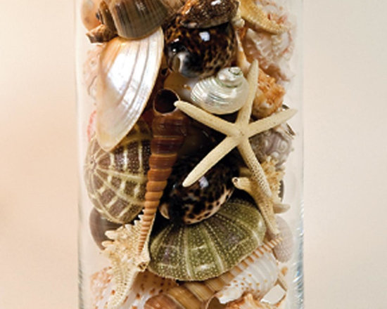 Shell Collection -