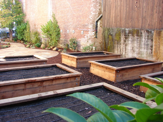 Raised Vegetable Boxes contemporary