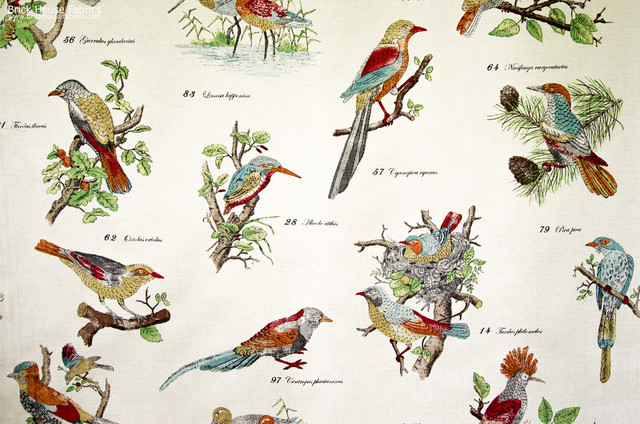 Bird Species Fabric Document Script Nature Print