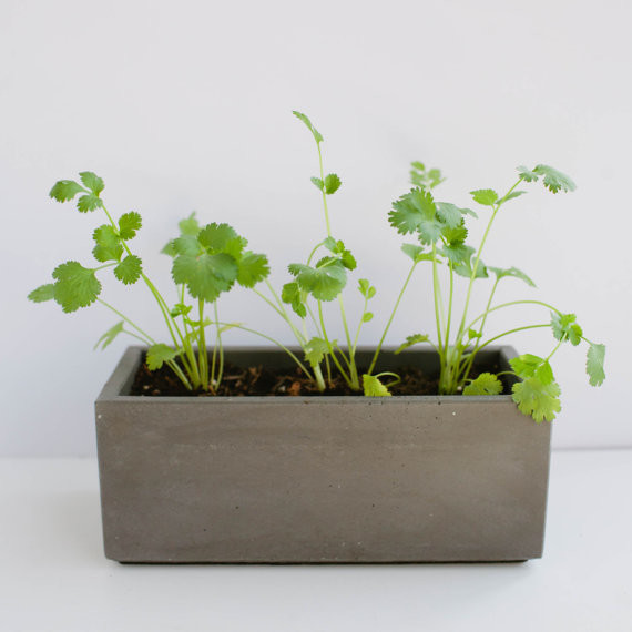 Charcoal Gray Concrete Planter by Nystrom Goods traditional-outdoor-planters
