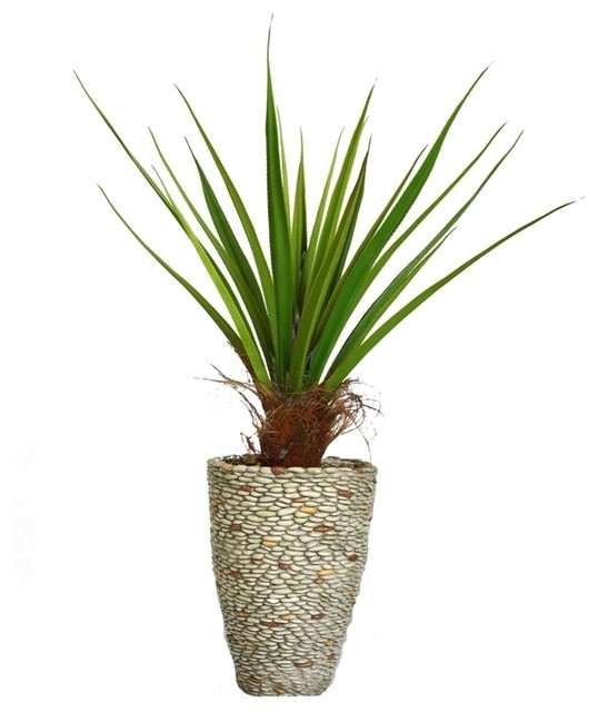 Laura ashley 58 inch tall agave plant with cocoa skin in for Indoor decorative live plants