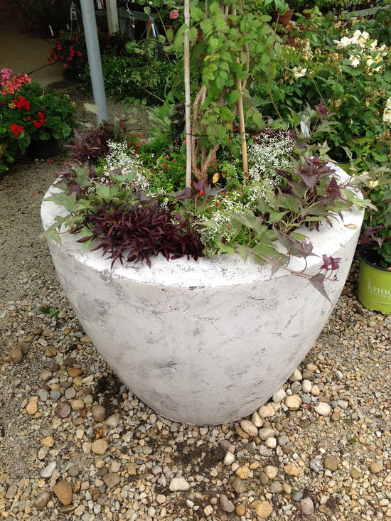 Large Concrete Drum Planters -