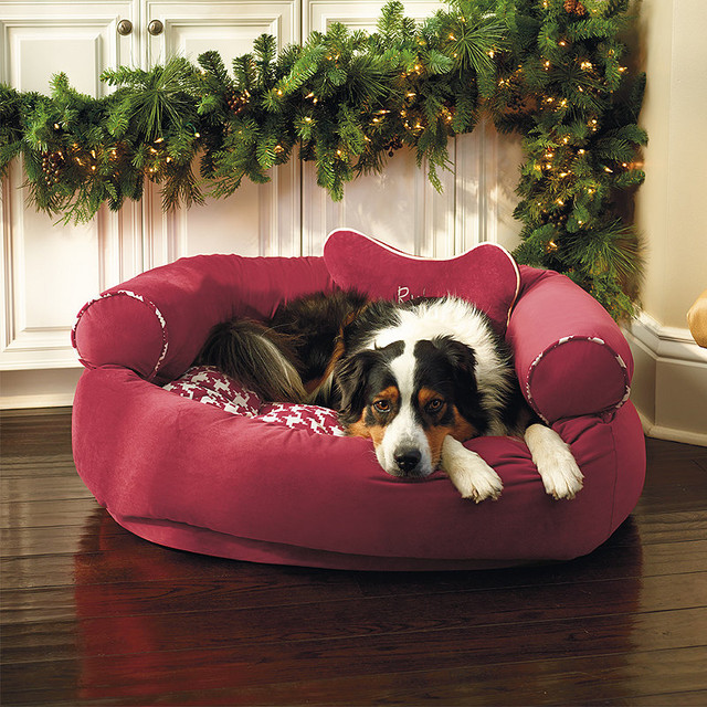 Multicolored Comfy Couch Pet Bed - Small (Up to 15 lbs ...