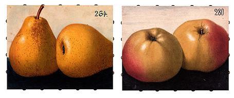 Antique Fruit Canvas Art traditional-artwork