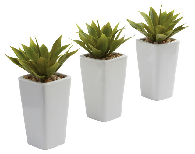 Mini Agave And White Planter Set Set Of 3 Contemporary Indoor Pots And