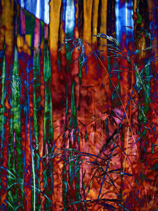 Stained Grasses - Abstract Art by Meghan at FireBonnet Designs - This is a photograph of a wooded glen from grass level in my gallery called Grassy Sentinels.  I gave it an abstract almost stained glass feel in post processing.