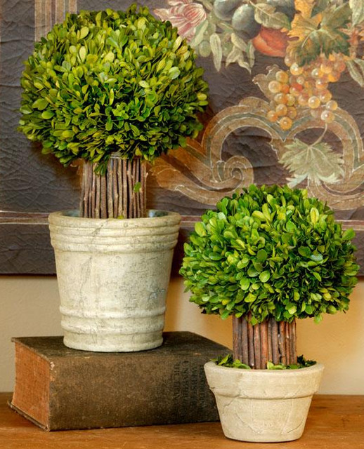 Small Hedged Boxwood Topiary traditional-indoor-pots-and-planters
