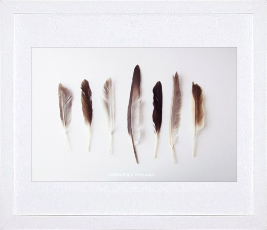 Autumn Feathers by Miles of Light traditional-artwork
