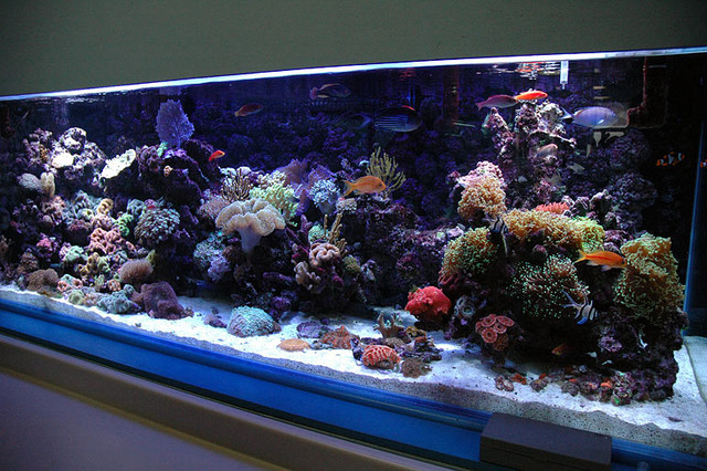 Reef-Live traditional