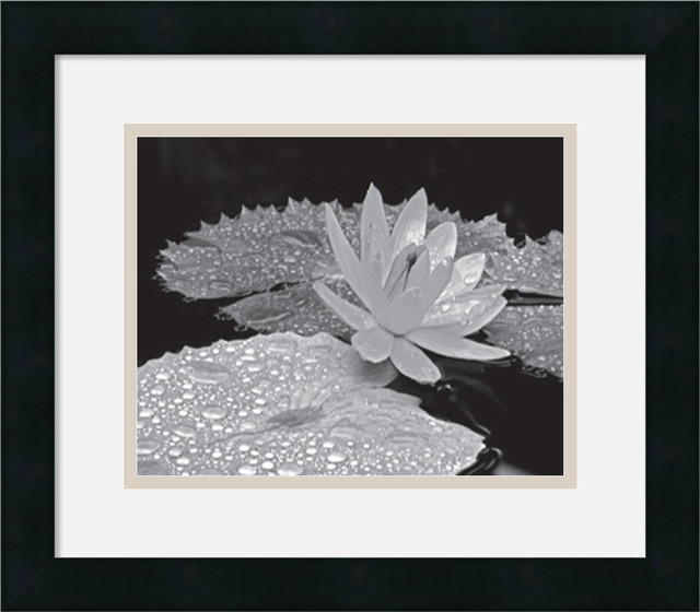 Droplets on Water Lily Framed Print by Dennis Frates traditional-prints-and-posters