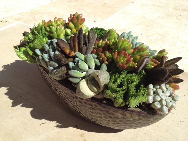 succulent landscapes gardens amp containers contemporary